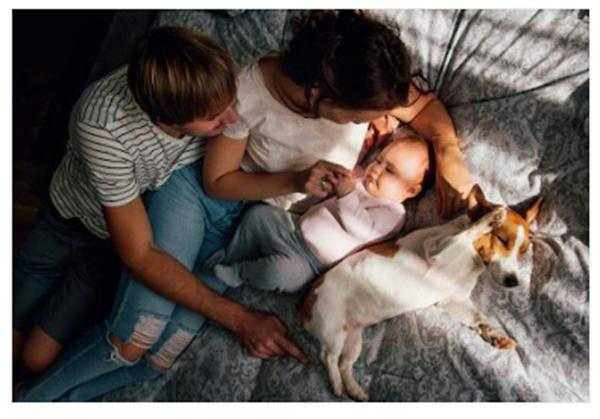 Os pets não passam para os humanos o coronavirus