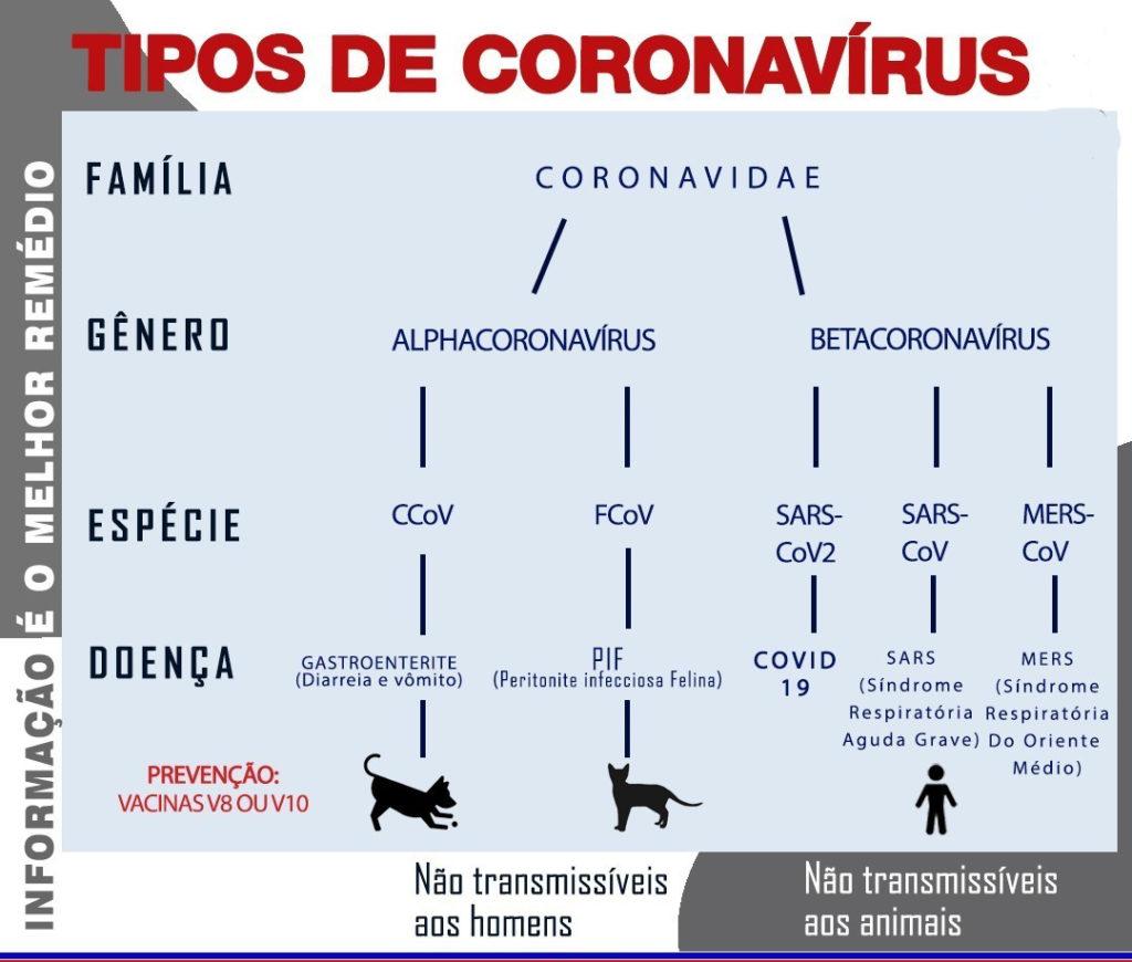 Os tipos de coronavirus e as diferenças entre pets e humanos