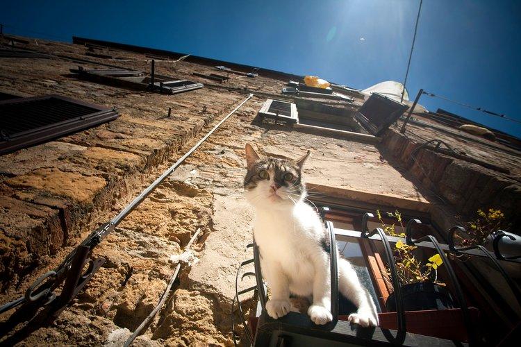Gatos são mais exploradores mais resistentes a passar a quarentena em casa