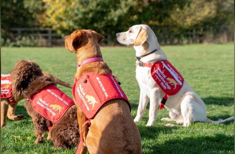 Cães farejadores são treinados para detectar o vírus