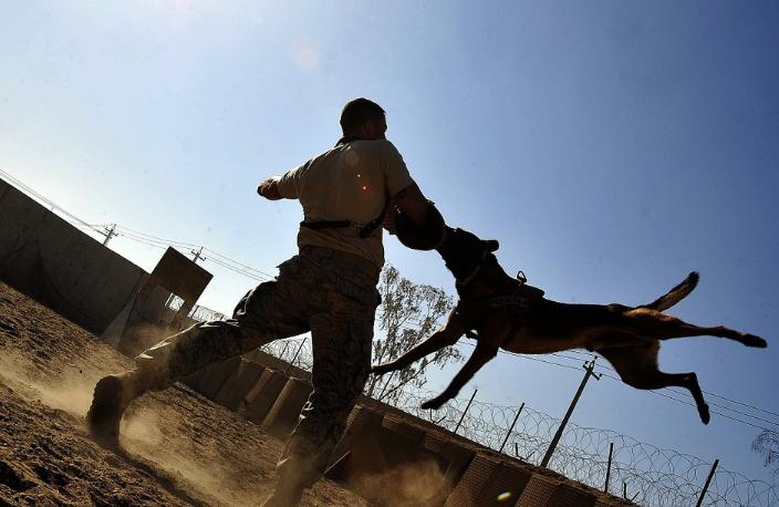Adestramento pode ajudar a evitar o ataque de cães