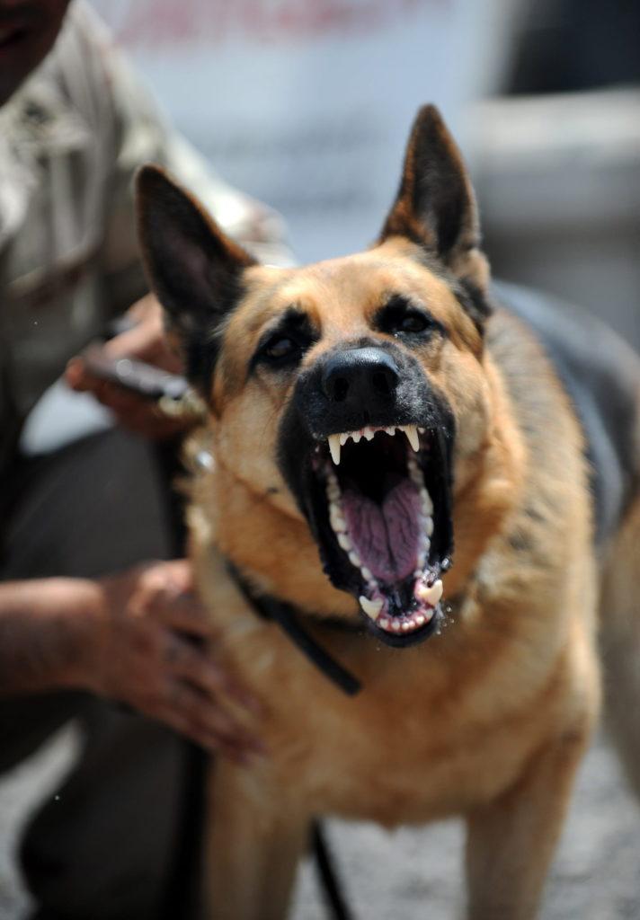 Um dos motivos de ataques de cães ocorrem é porque eles se sentem ameaçados