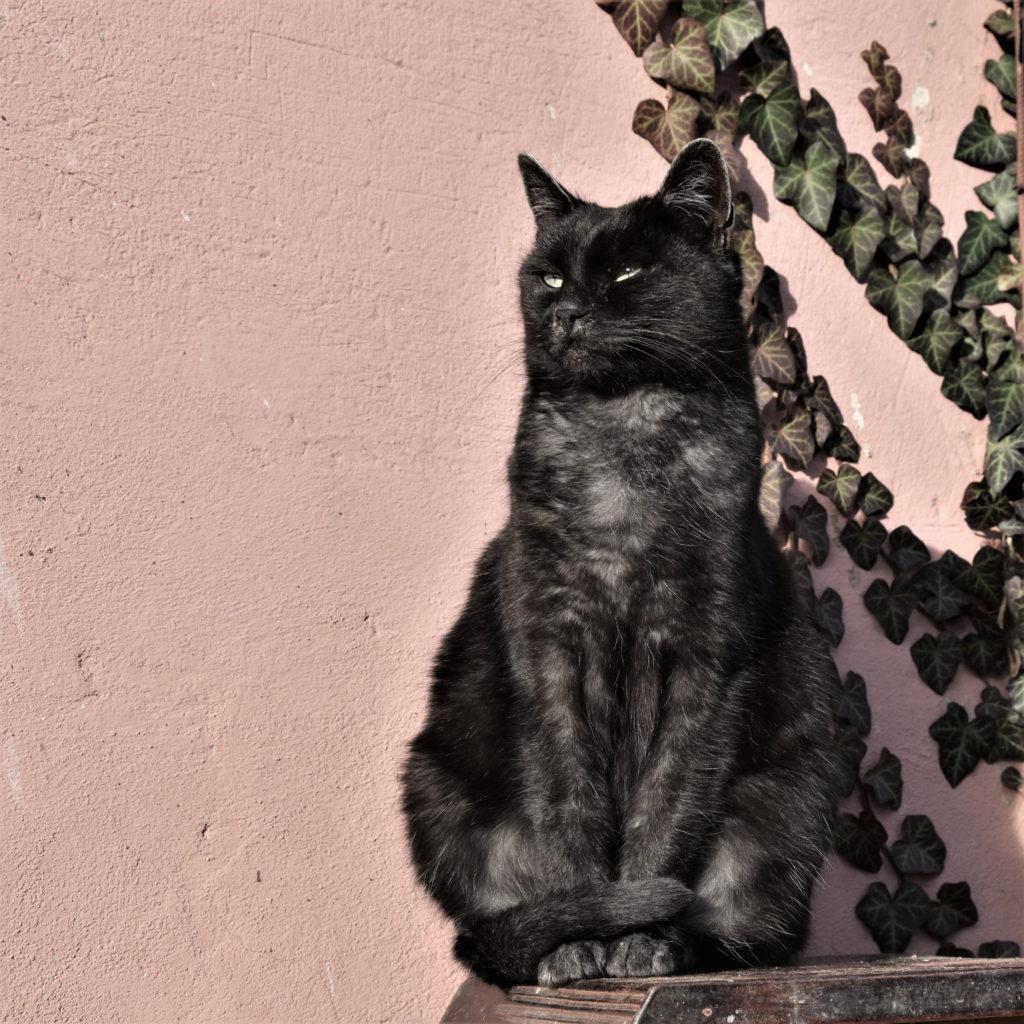 Gateiros modernos preferem os gatos pretos