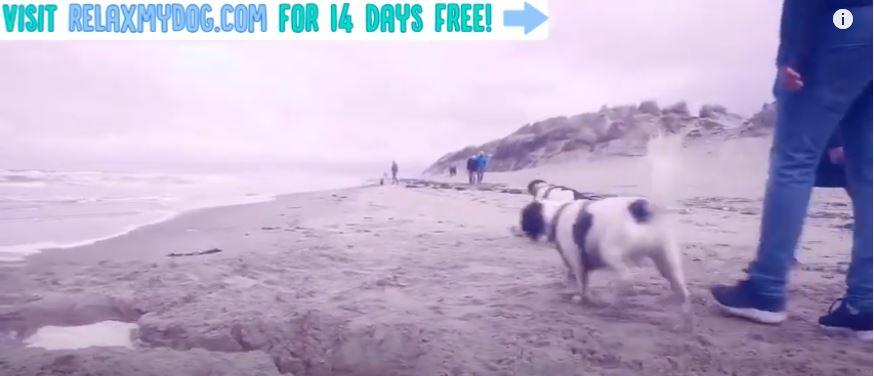 YouTube oferece entretenimento para os pets por 24 horas