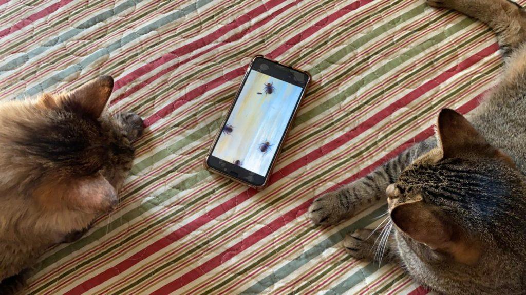 App e canais no YouTube oferecem entretenimento para os pets