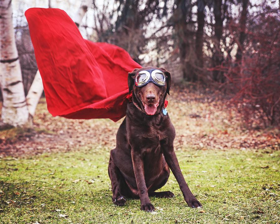 Estudo analisa comportamento do cachorro para salvar seu tutor