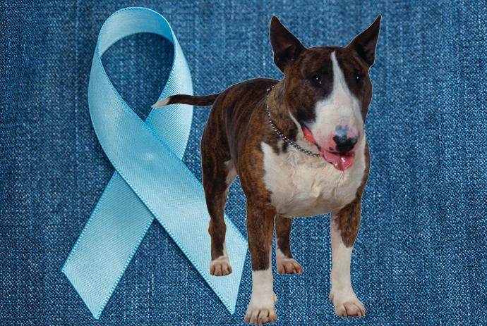O Câncer de próstata em pets pode ser fatal