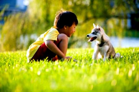 O medo dos cães pode ser tratado com aproximação dos filhotes