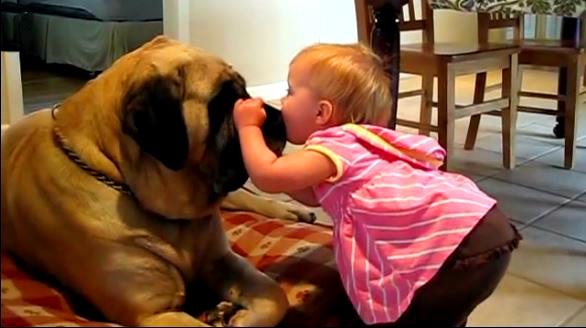 O medo dos cães é conhecido como cinofobia e tem tratamento