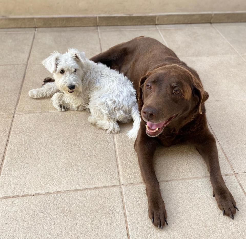 Diabetes em cachorros independe da idade ou raça